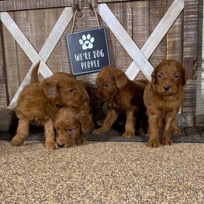 Lucky's Litter Coming Soon