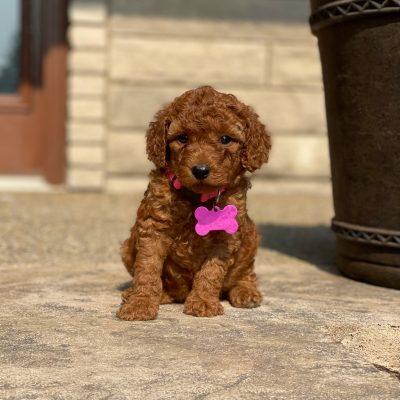 Beulah's Pink Collar Girl
